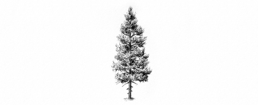 How to Draw Trees Tutorial pine tree drawing with pencils