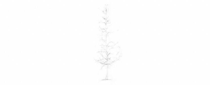 How to Draw Trees Tutorial realistic pine tree branches drawing