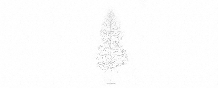 How to Draw Trees Tutorial evergreen pine tree drawing