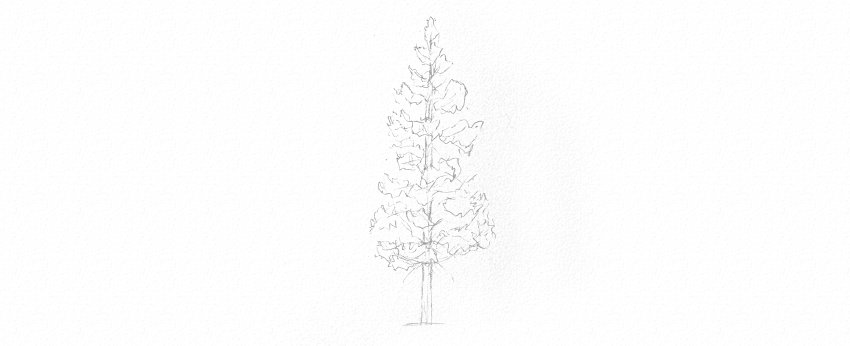 How to Draw Trees Tutorial pine tree trunk drawing