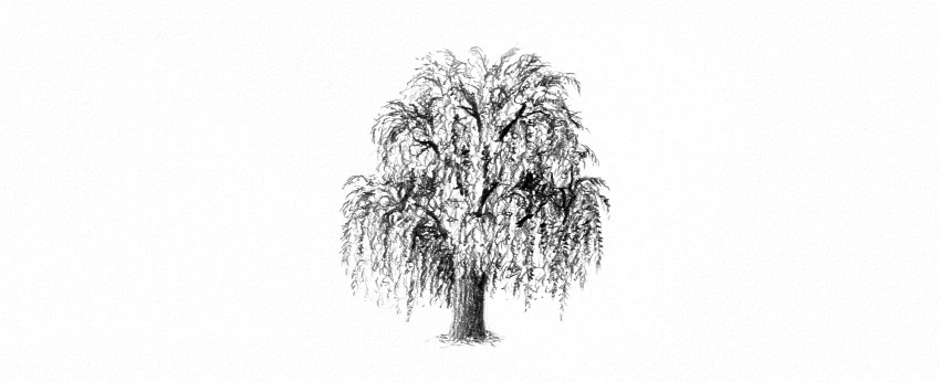 How to Draw a Tree Easy Tutorial weeping willow tree drawing with pencils