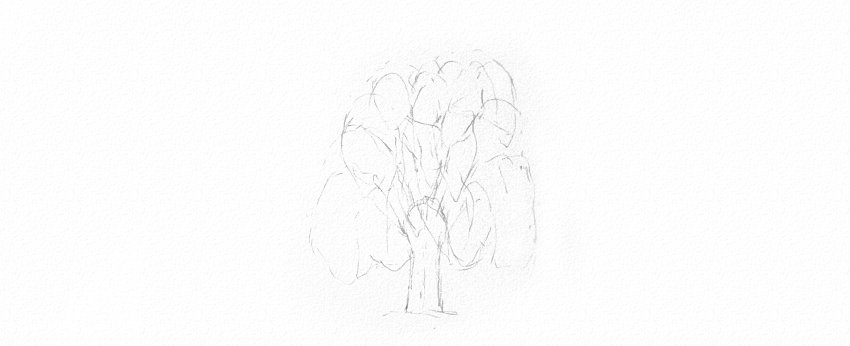 How to Draw a Tree Easy Tutorial plan weeping willow tree leaves drawing